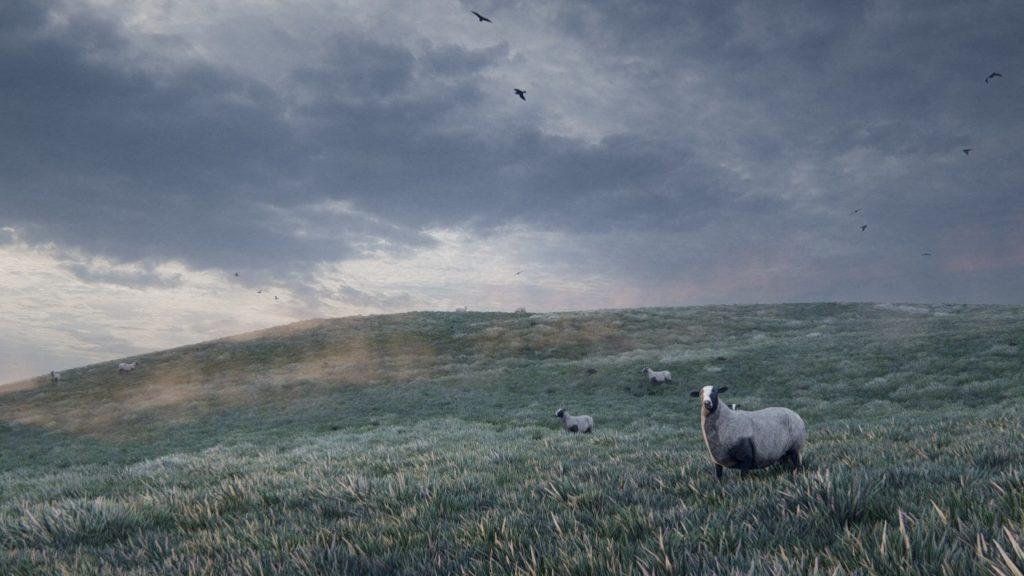 Gui Felix Sheep on hill